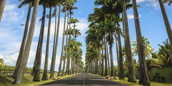 Voyage en Guadeloupe - Prespataire Local Gwada'Camp