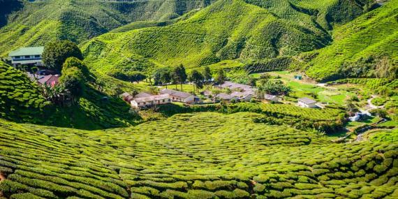 Voyage en Malaisie - Agence de Voyage Locale Pro eco Adventure