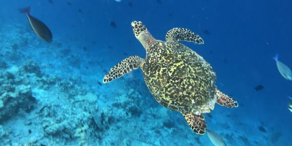 Voyage aux Maldives - Agence de Voyage Locale Acme Travel