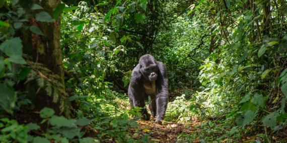 Voyage en Ouganda - Agence de Voyage Locale Mapendano