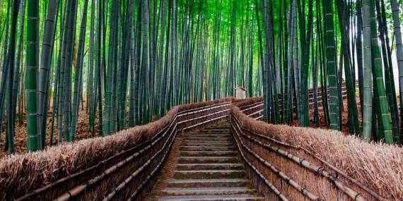 Voyage au Japon - Agence de Voyage Locale Shanti Travel