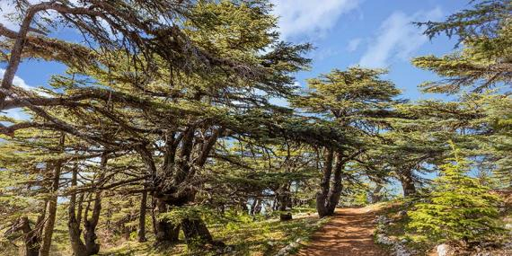 Voyage au Liban - Agence de Voyage Locale Travel Sense