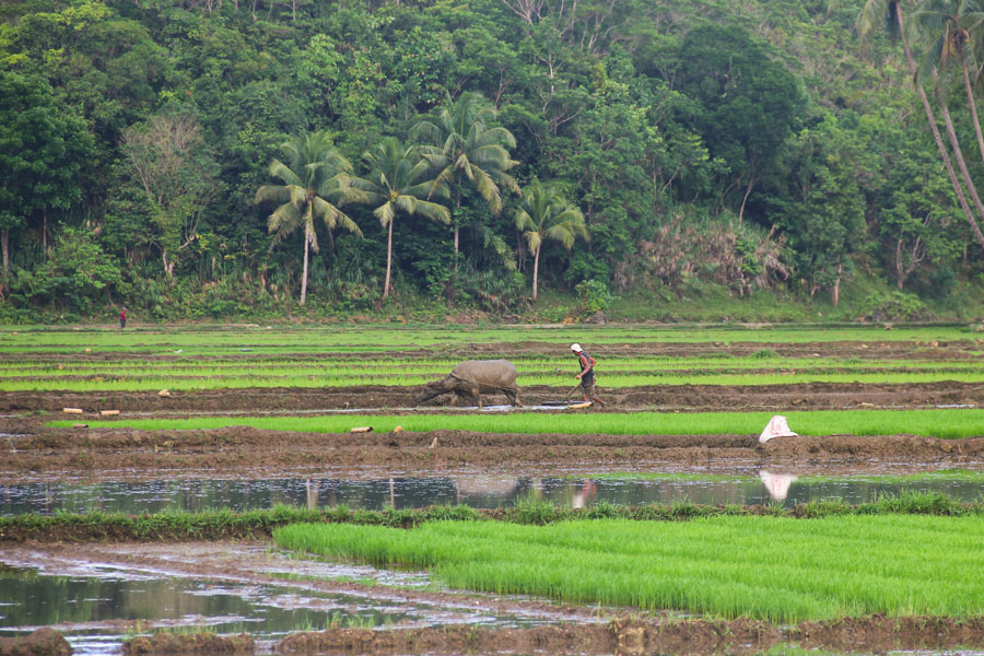 Philippines - Plages de Rêve en Collines de Chocolat à Bohol