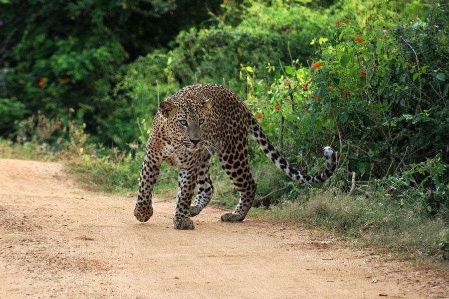 Le Sri Lanka Côté Nature - Eléphants et Orchidées