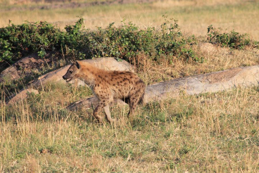 Tanzanie - Ngorongoro et Serengeti