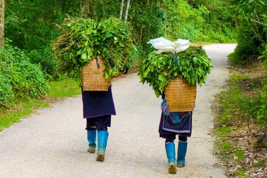 Vietnam - A la rencontre des Ethnies du Nord
