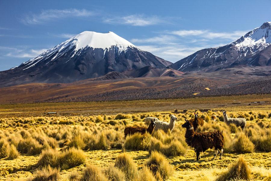 Bolivie - Entre ciel et terre au Parc national Sajama