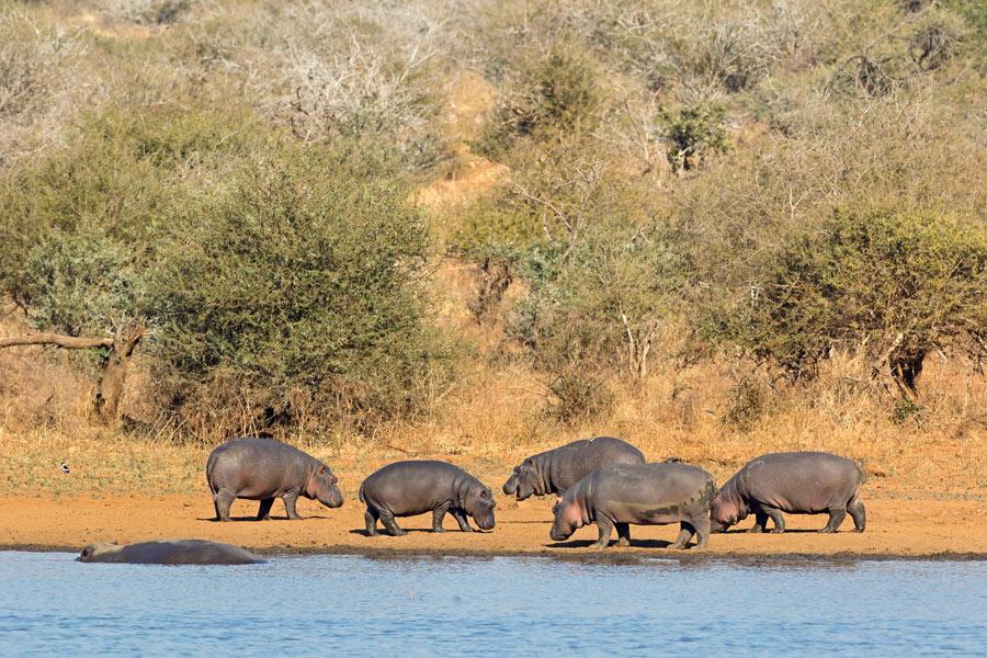 Afrique du Sud - A La Conquête des Big Five en Safari