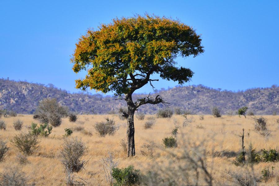 Afrique du Sud - Les Plantes Magiques d'Afrique du Sud