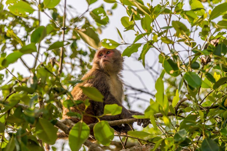 Bangladesh - La Forêt de Mangrove des Sundarbans
