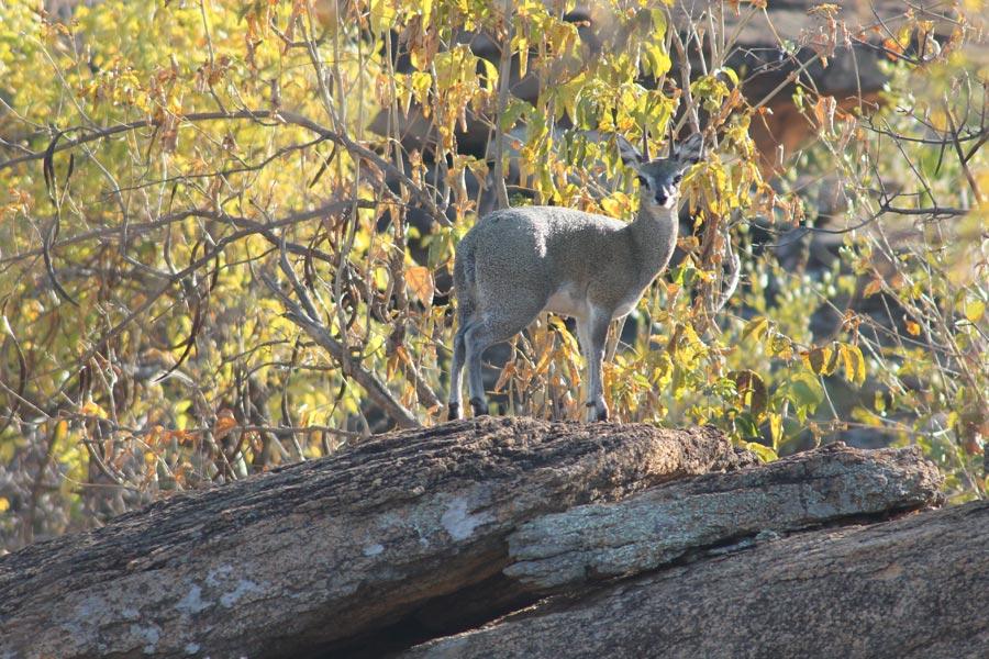 Botswana - Wild At Tuli