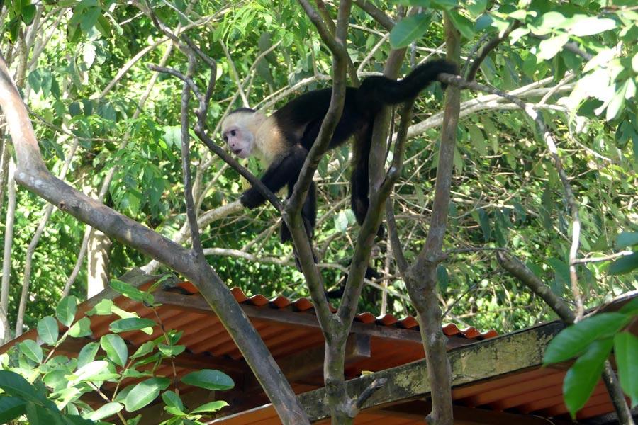 Costa Rica - Osez la Péninsule d'Osa