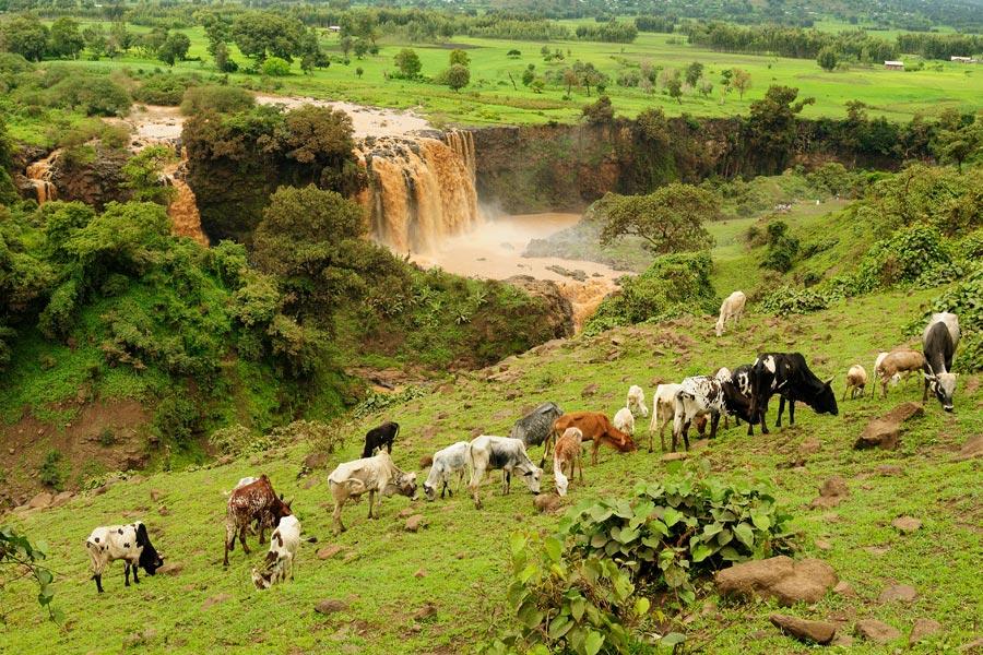 Ethiopie - Le lac Tana, aux Sources du Nil bleu