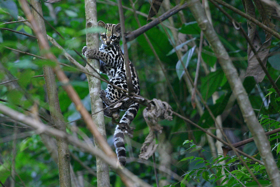 Guyane - Un Bout d'Amazonie en France