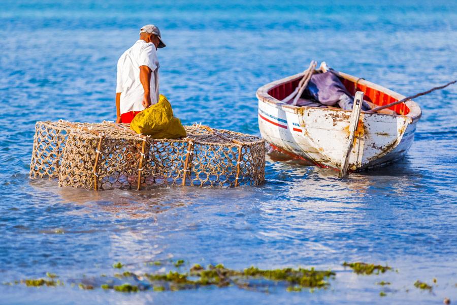 'Ile Maurice : Secrets Bien Gardés