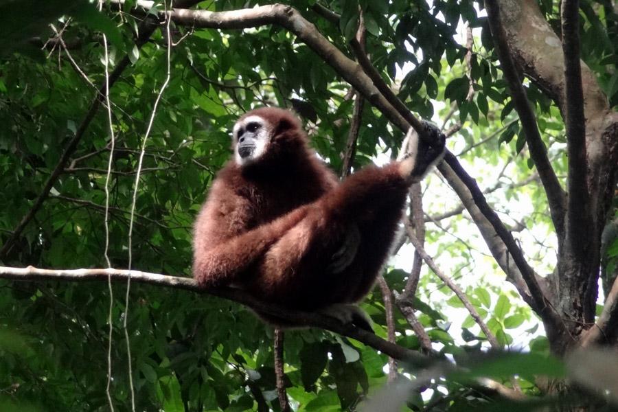 Indonésie - Camper au milieu des Orang Outans à Sumatra