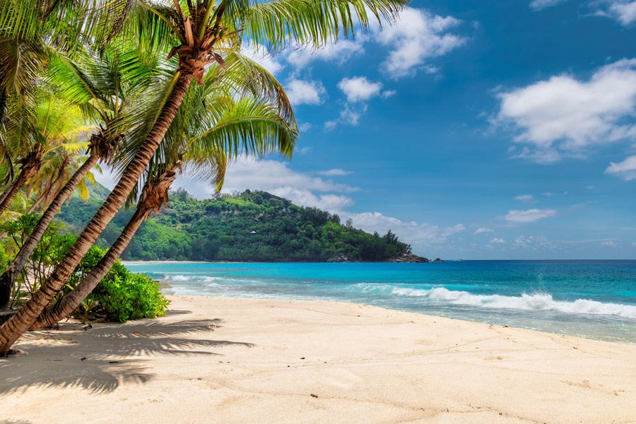 Jamaïque -Terre de Contraste