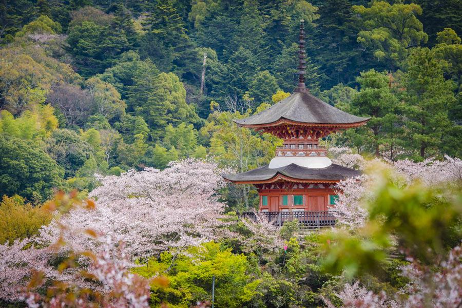 L'île de Miyajima, le Trésor Shintô du Japon