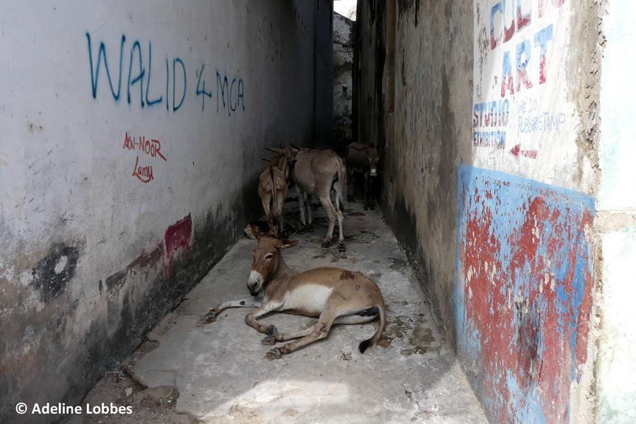 Kenya - Lamu, une Écrin dans l'Océan
