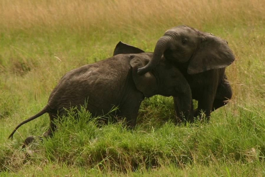 Kenya - Maasai Mara, Terre des Maasai et des Animaux Sauvages…