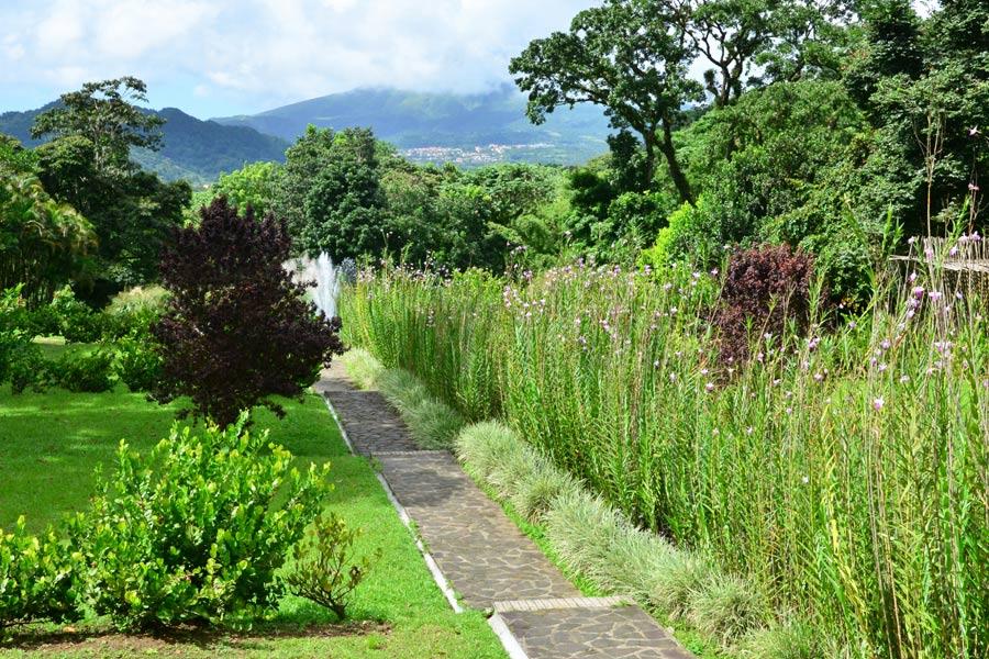 Martinique - Sur la Route de la Trace