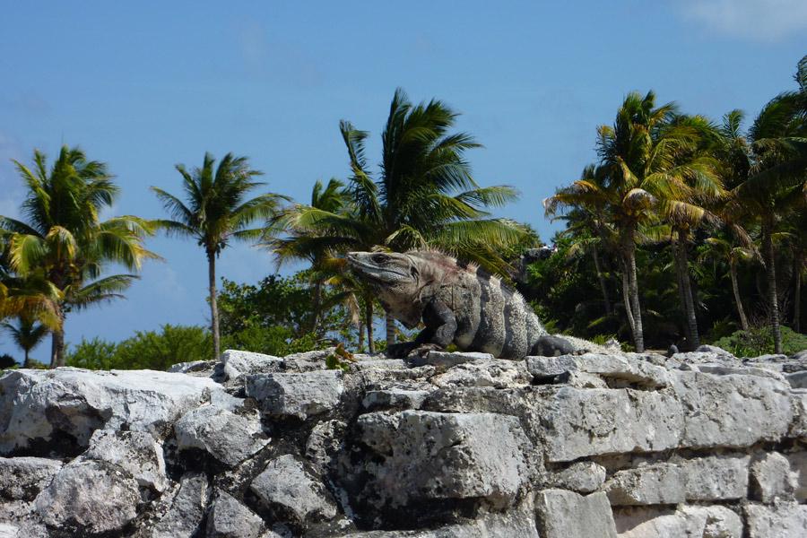 Mexique - Tour d'Horizon du Yucatán