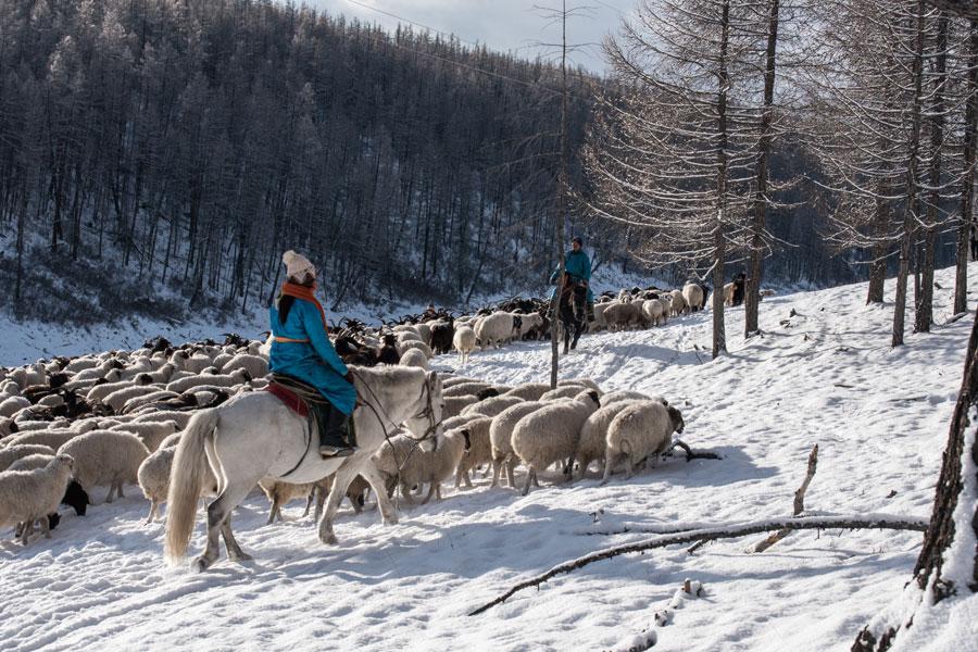 Mongolie - Hivernale en Mongolie….. Aventure en traineau à chiens