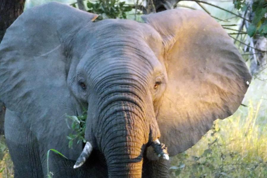 Mozambique - Écotourisme au Parc National de Gorongosa