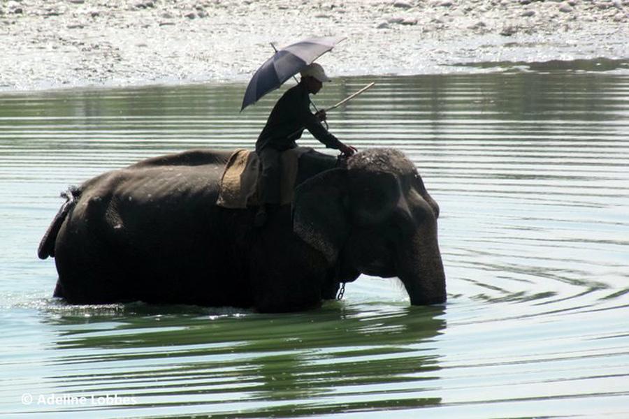 Népal - Bardia, Une Parenthèse Sauvage au Pays de la Spiritualité