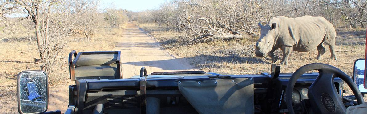Voyage Découverte en Afrique du Sud - Karongwe, un combat pour sauver les rhinos