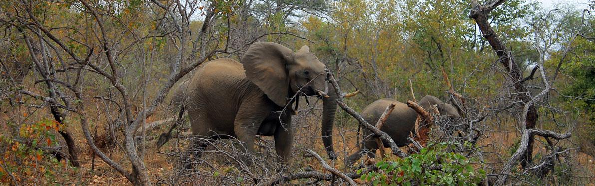 Voyage Découverte en Afrique du Sud - Selati, la Véritable Wilderness Sud-Africaine