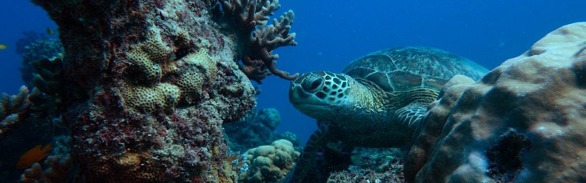 Voyage Découverte en Australie - La Grande Barrière de Corail
