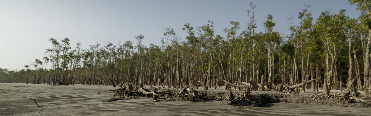 Voyage Découverte au Bangladesh - La Forêt de Mangrove des Sundarbans