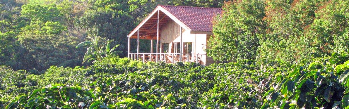 Voyage Découverte au Costa Rica - L'un des meilleurs café au monde