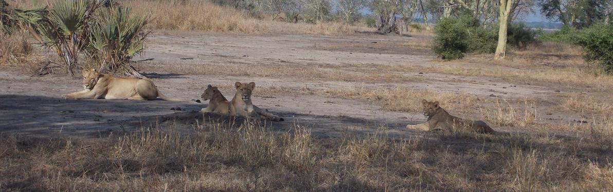 Voyage découverte au Mozambique - Écotourisme au Parc National de Gorongosa