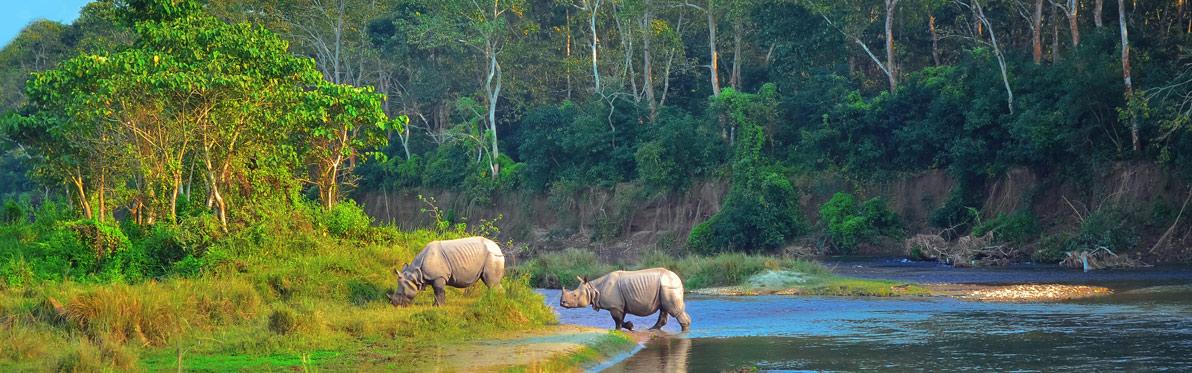 Voyage Découverte au Népal - Chitwan, un parc national d'une valeur exceptionnelle