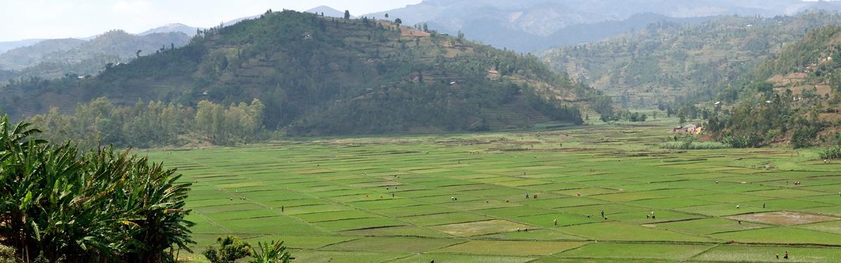 Voyage Découverte au Rwanda - Rwanda, là où traine encore le Cri des Singes