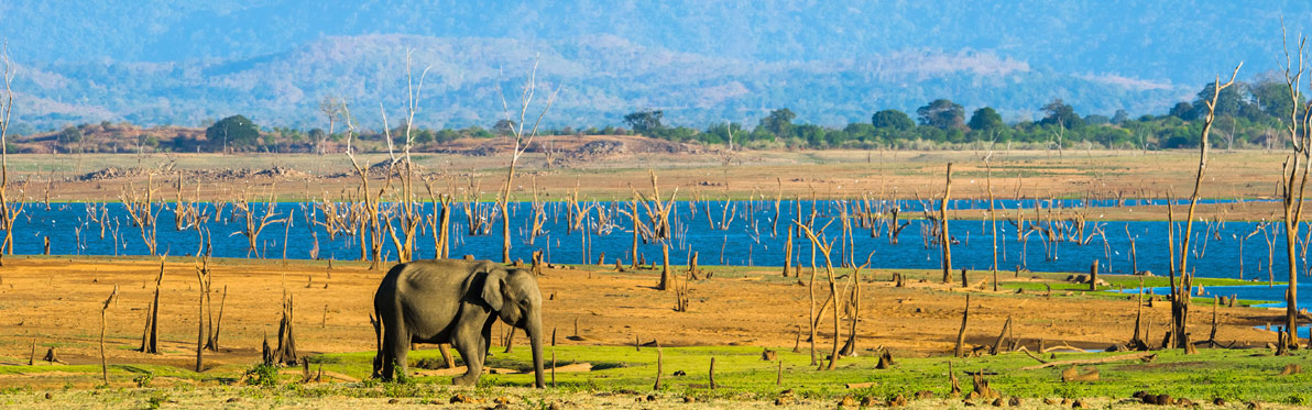 Voyage Découverte au Sri Lanka - Le Sri Lanka Côté Nature - Eléphants et Orchidées