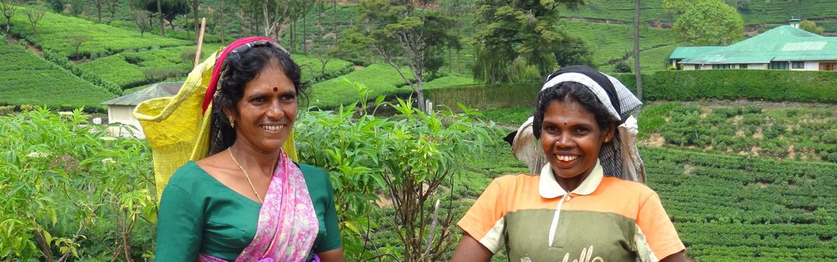 Voyage Découverte au Sri Lanka - Le pays du Thé