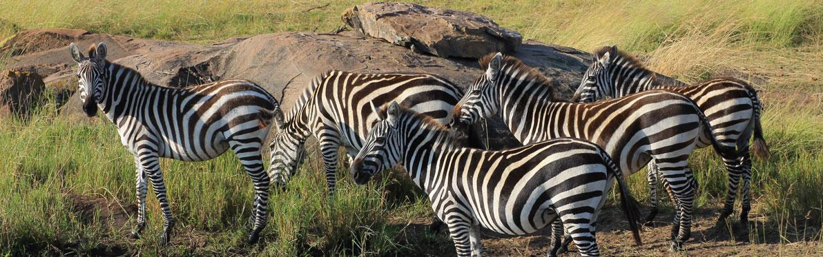 Voyage Découverte en Tanzanie - Ngorongoro et Serengeti