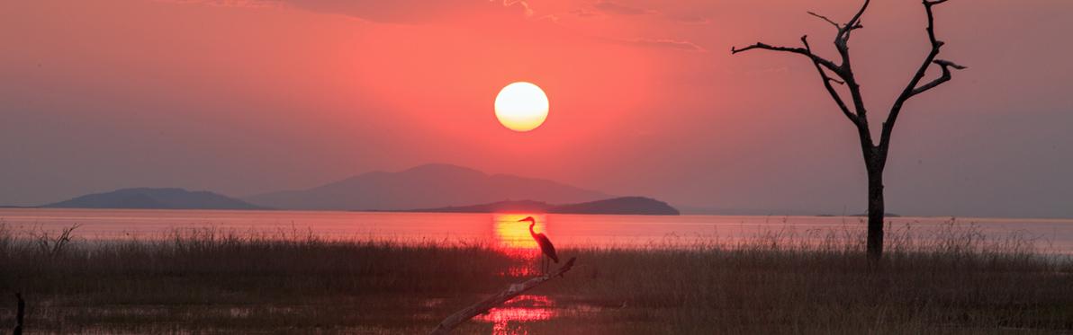 Voyage Découverte au Zimbabwe - Triade de Parcs Nationaux au Zimbabwe