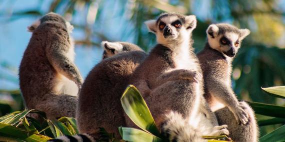 Guide de Voyage - Madagascar