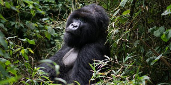 Guide de Voyage - Rwanda