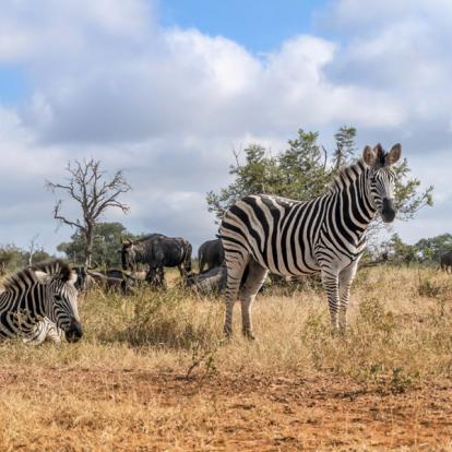 Voyage en Afrique du Sud : Combiné Mozambique - Afrique du Sud