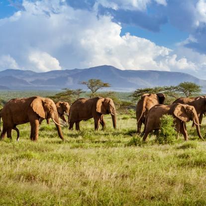 Voyage en Afrique du Sud : Du Cap au Kruger