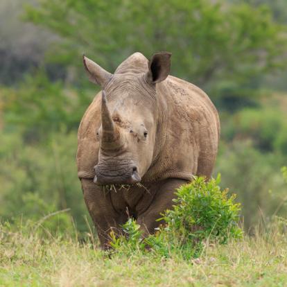 Voyage en Afrique du Sud : L'Essentiel de l'Afrique du Sud