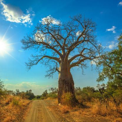 Circuit en Afrique du Sud : L'Afrique du Sud Sauvage