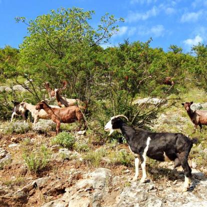 Voyage en Albanie: Alpes et Traditions du Nord de l'Albanie