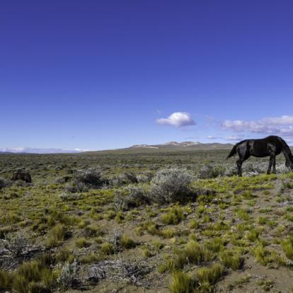 Circuit n Argentine : Expédition Equestre et communautés locales
