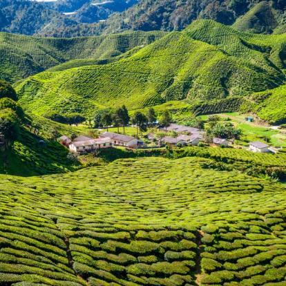 Voyage en Malaisie : Terre de Contrastes